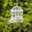 Birdcage with flowers inside, hanging on a branch in green — Stok fotoğraf