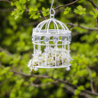 Birdcage with flowers inside, hanging on a branch in green — Стоковая фотография
