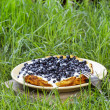 Omelette with blueberries on grass. Garden party, summer food — Stock Photo