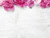 Stunning peonies on wooden background. Copy space — Stock Photo