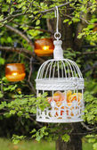 Pastel roses in white vintage birdcage hanging on branch. Garden — Stock Photo