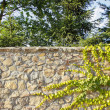 The green ivy on a sand stone wall, garden behind the wall — Stock Photo