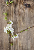 Apple blossom on wooden background. Copy space. — Stockfoto