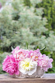 Stunning peonies in white wicker basket on rustic wooden table — Stock Photo
