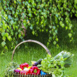 Basket of fresh vegetables in the garden. Birch branches — Stock Photo