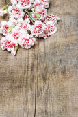 Red and white carnations on wooden table. Copy space, blank boar — Stock Photo