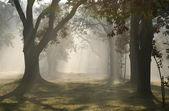Rays of light in misty forest — Stock Photo