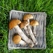 Basket of mushrooms on green grass — Stock Photo