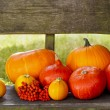 Beautiful orange and yellow pumpkins on wooden bench — Stockfoto #30364513