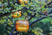 Orange lantern hanging on hawthorn branch. Garden party decor — Stock Photo