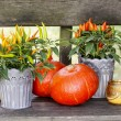 Peppers and pumpkins on wooden bench. Beautiful autumn setting — Stock Photo #30650945