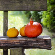 Colorful pumpkins on wooden bench in the garden. — Stock Photo
