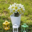 Summer garden party decor. Pretty colorful lanterns on green — Stock Photo