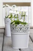 Fresh white daisies in library — Stock Photo