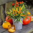 Peppers and pumpkins on wooden bench. Beautiful autumn setting i — Stock Photo #31820213