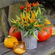 Peppers and pumpkins on wooden bench. Beautiful autumn setting i — Stock Photo