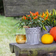 Peppers and pumpkins on wooden bench. Beautiful autumn setting i — Stock Photo #31823045