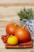 Small and big colorful pumpkins on checkered table cloth. Autumn — Foto de Stock