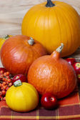 Small and big colorful pumpkins on checkered table cloth — Stock Photo