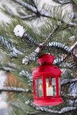 Röda lyktan hänger på gran gren — Stockfoto