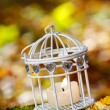 Beautiful bird cage in autumn forest — Stock Photo #38938439