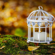 Beautiful bird cage in autumn forest — Stock Photo #38938505