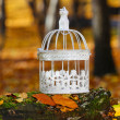 Beautiful bird cage in autumn forest — Stock Photo #38938635