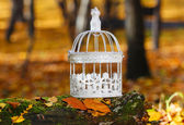 Beautiful bird cage in autumn forest — Stock Photo