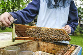 Beekeeper at work. Bees at hive in lush summer garden. — Stock Photo