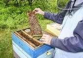 Пчеловод на работе. пчелы в улье в пышный летний сад. — Стоковое фото