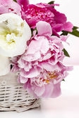 Basket of peonies — Stock Photo