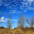 Stock Photo: Autumn trees on sunny november day. Blue sky with clouds