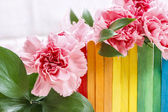 Beautiful pink carnation flowers on wooden fence in rainbow colo — Stock Photo