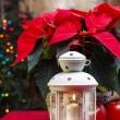 Stock Photo: Beautiful white lantern under red poinsettia flower. Christmas