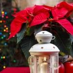 Beautiful white lantern under red poinsettia flower. Christmas — Stock Photo