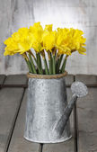 Daffodils in silver watering can on grey wooden table — Stock Photo