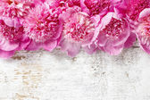 Stunning pink peonies on rustic wooden background. Copy space — Stock Photo
