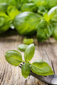 Basil leaves isolated on wooden background — Stock Photo