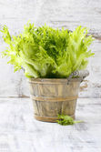 Crispy lettuce in wooden bucket — Stock Photo
