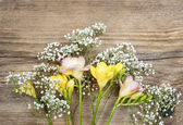 Beautiful pink and yellow freesia flowers on wooden background.  — Stock Photo