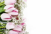 Beautiful pink and white tulips isolated on white background. Co — Stock Photo