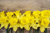 Beautiful yellow daffodils on brown wooden board. Copy space — Stock Photo