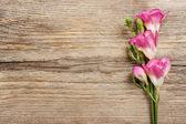 Roze fresia's bloemen op houten achtergrond. kopie ruimte — Stockfoto