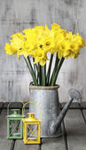 Beautiful yellow daffodils in silver watering can and small iron — Stock Photo