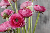 Pink persian buttercup flowers (ranunculus) on wooden background — Zdjęcie stockowe