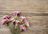 Розовые гвоздики цветы, изолированные на деревянный фон — Стоковое фото