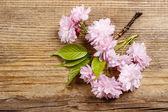 Piękne kwitnienia migdałów (prunus triloba) na tle drewniane — Zdjęcie stockowe