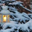 White lantern standing on fir branch in forest. Beautiful winter — Stock Photo
