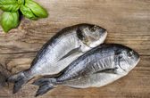 Gilt-head bream fish on wooden background. Mediterranean tavern, — Stock Photo