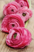 Pink persian buttercup flower (ranunculus) on wooden background. — Stockfoto
